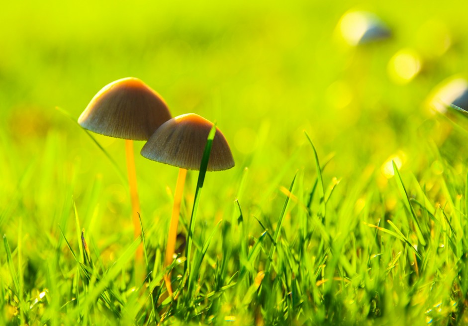 Naturen i farver